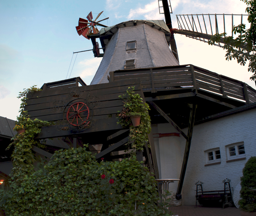 Efeu an der Pirsch-Mühle